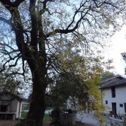 Ferme Passion Chambre Bresse - Jardin et barbecue - Chambre d'hôtes - Saint-Trivier-sur-Moignans