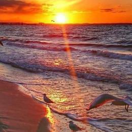 Terrasse Vue Mer à 180° - Location de vacances - Saint Pierre La Mer