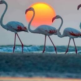 Vue de la terrasse - Location de vacances - Saint Pierre La Mer