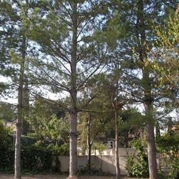 Le jardin - Location de vacances - Istres
