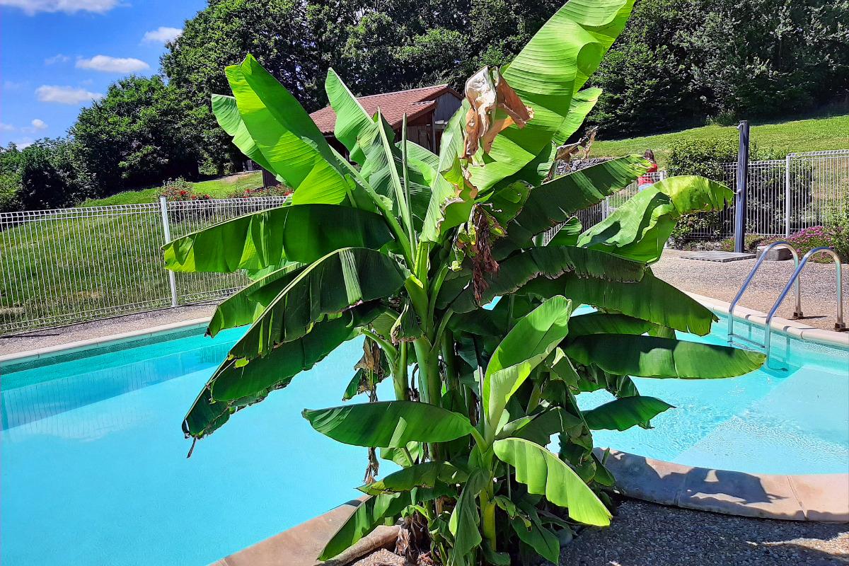 chalet en bois Le Rossignol vue dégagée sur piscine et collines - Location de vacances - Junhac