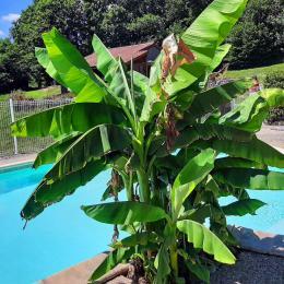 gite en bois Le Rossignol vue dégagée sur piscine et campagne - Location de vacances - Junhac