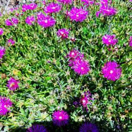terrasse panoramique couverte avec très jolie vue - Location de vacances - Junhac
