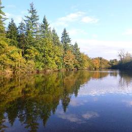L'étang - Ambernac - Location de vacances - Ambernac