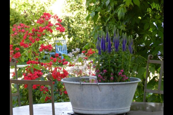 L'environnement fleurie de la Maraîchine - Location de vacances - Rochefort