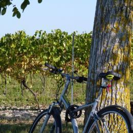 SALIGNAC-SUR-CHARENTE - Vignes © CMT17 C. TRIBALLIER-7 - Location de vacances - Neulles
