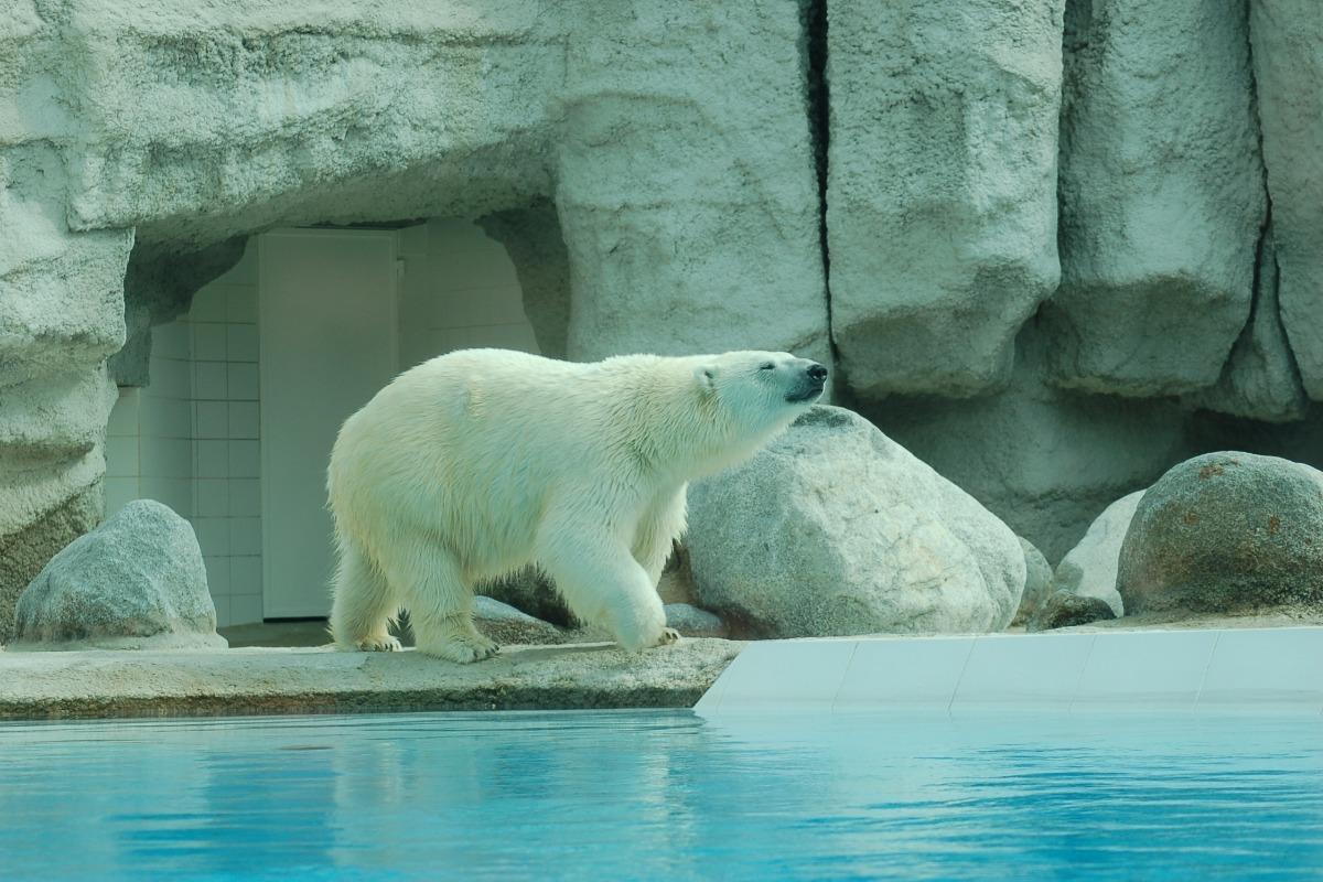 ... Zoo de La Palmyre - Location de vacances - Breuil-Magné ...