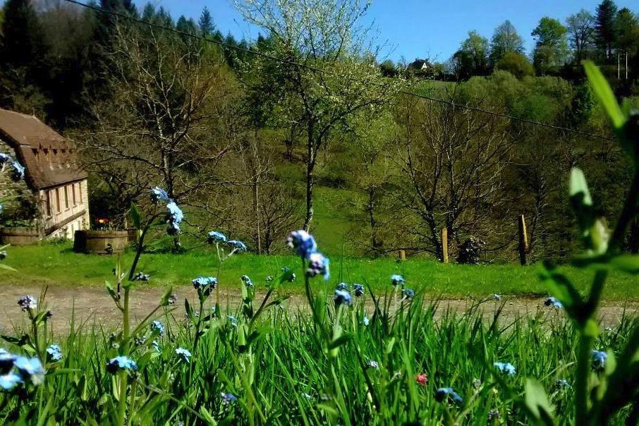 - Location de vacances - Beaulieu-sur-Dordogne