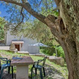 jardin - Location de vacances - Pietracorbara