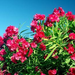 La douche solaire dans le jardin avec réglage de la température, idéale au retour de la plage. - Location de vacances - Poggio-Mezzana