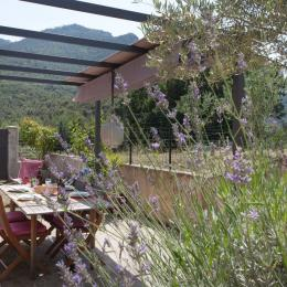Terrasse attenante à la cuisine - Location de vacances - Gavignano