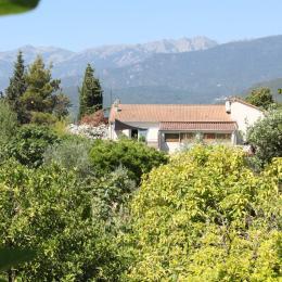 Maison vue du verger - Location de vacances - Ghisonaccia