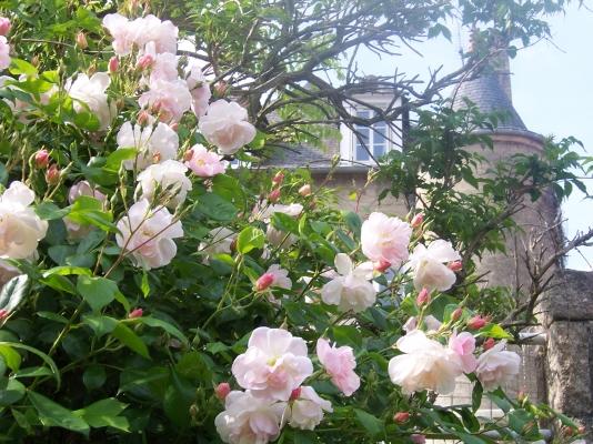 Côté jardin   - Location de vacances - Dinan