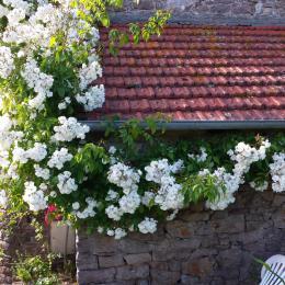 L' Appentis de  Charline  et ses Roses - Location de vacances - Paimpol