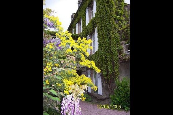 Le genêt et la glycine au printemps  - Location de vacances - Dinan