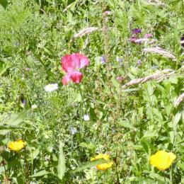 Pré aux fleurs.  Wildflower meadow - Location de vacances - Pluduno