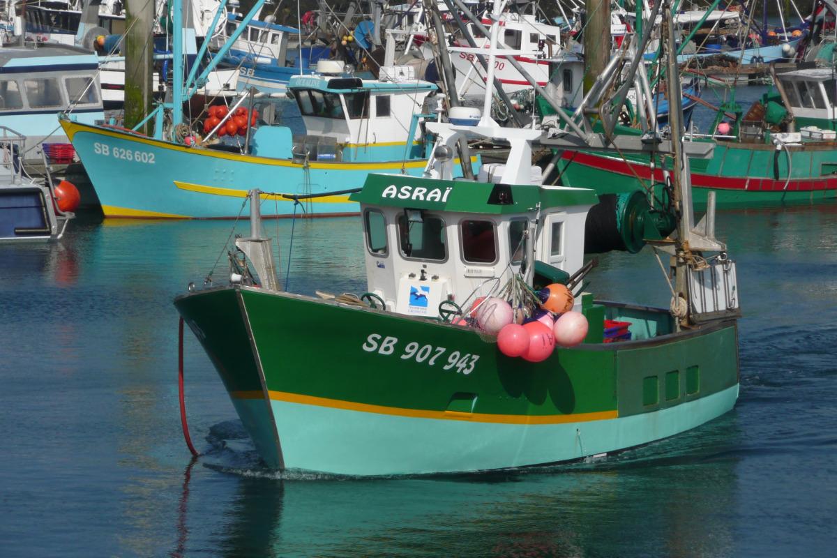 Arrivée de la pêche: coquilles st jacques, bars, ...