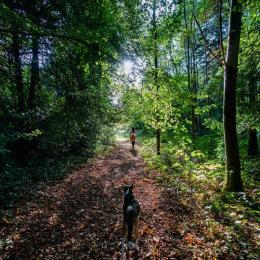 forêt - Location de vacances - Pléhédel