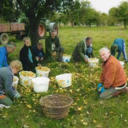 Le verger: ramassage  des pommes - Chambre d'hôtes - Sévignac