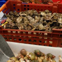 Les produits frais du marché du mardi.  - Location de vacances - Paimpol