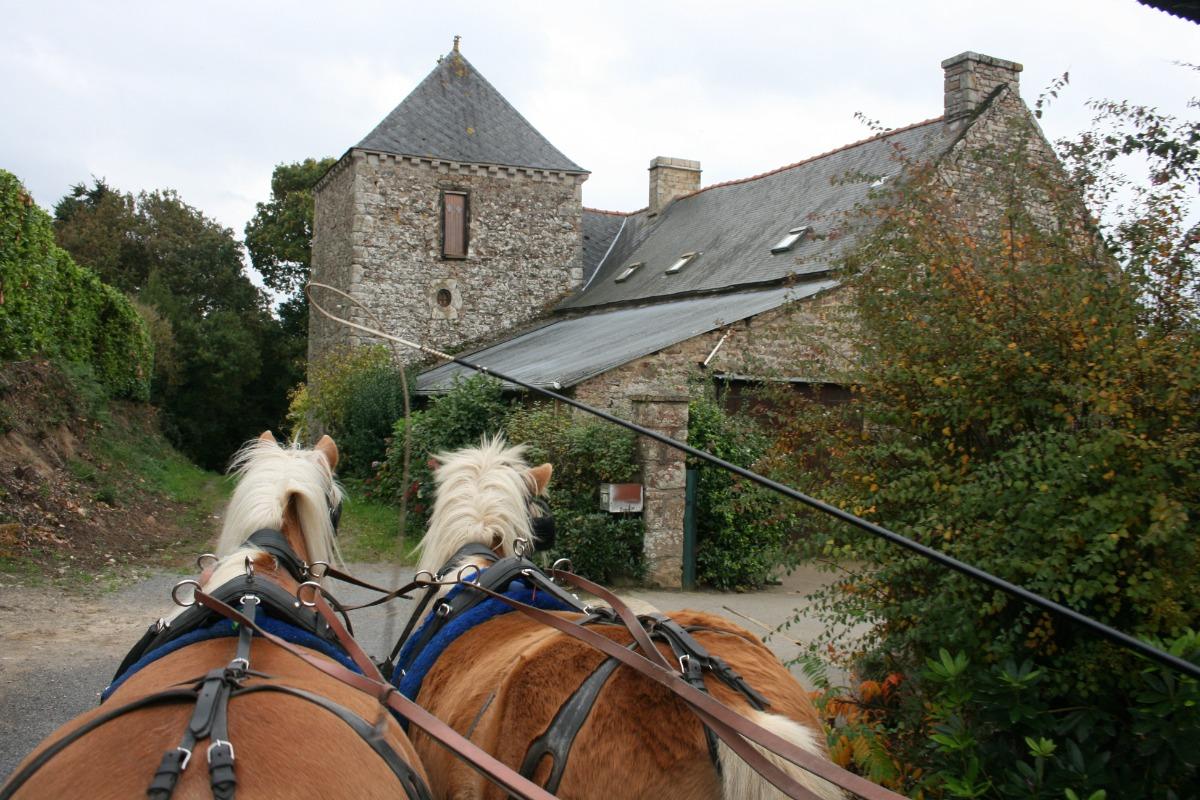 balades en calèche depuis l'écurie de Claude située derrière la maison, un moment inoubliable !  - Location de vacances - Mégrit