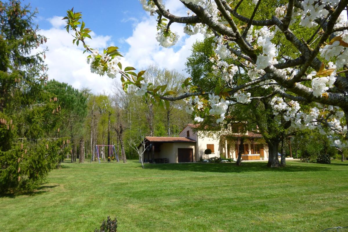 au printemps - cerisier en fleurs - Location de vacances - Capdrot