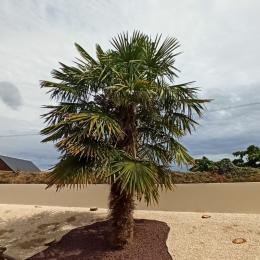 salon avec cheminée insert - Location de vacances - Bannalec