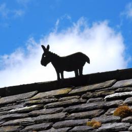 lignolet sur le toit des chambres d'hôtes de Brezehan dans les Monts d'Arrée - Chambre d'hôtes - Commana