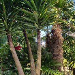 Les palmiers se trouvant autour de la terrasse  - Location de vacances - Plouarzel