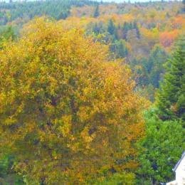 Vue de la maison sur la Forêt d'Huelgoat - Chambre d'hôtes - Huelgoat