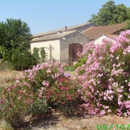 entre muriers centenaires et lauriers roses - Location de vacances - Aigues-Mortes