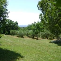 Le parc et le champ d'oliviers, chaises longues et salon de jardin. - Location de vacances - Saint-Privat-de-Champclos
