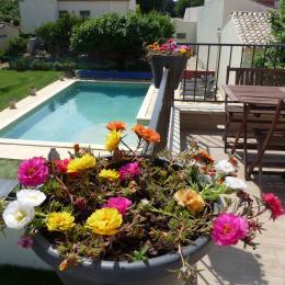 Vue de la terasse - Location de vacances - Caissargues