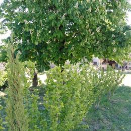Les arbres du jardin de L'Oustal - Location de vacances - Saint-Bénézet