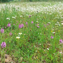 le pré d'orchidées sauvages   - Chambre d'hôtes - Castéra-Verduzan