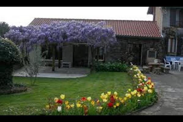 glycine en fleur , mars-avril, et tulipes - Chambre d'hôtes - Miélan