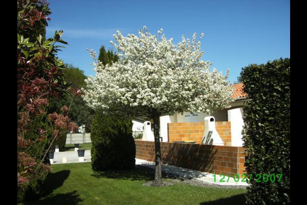 les couleurs du printemps,sur la face avant - Location de vacances - Vendays-Montalivet
