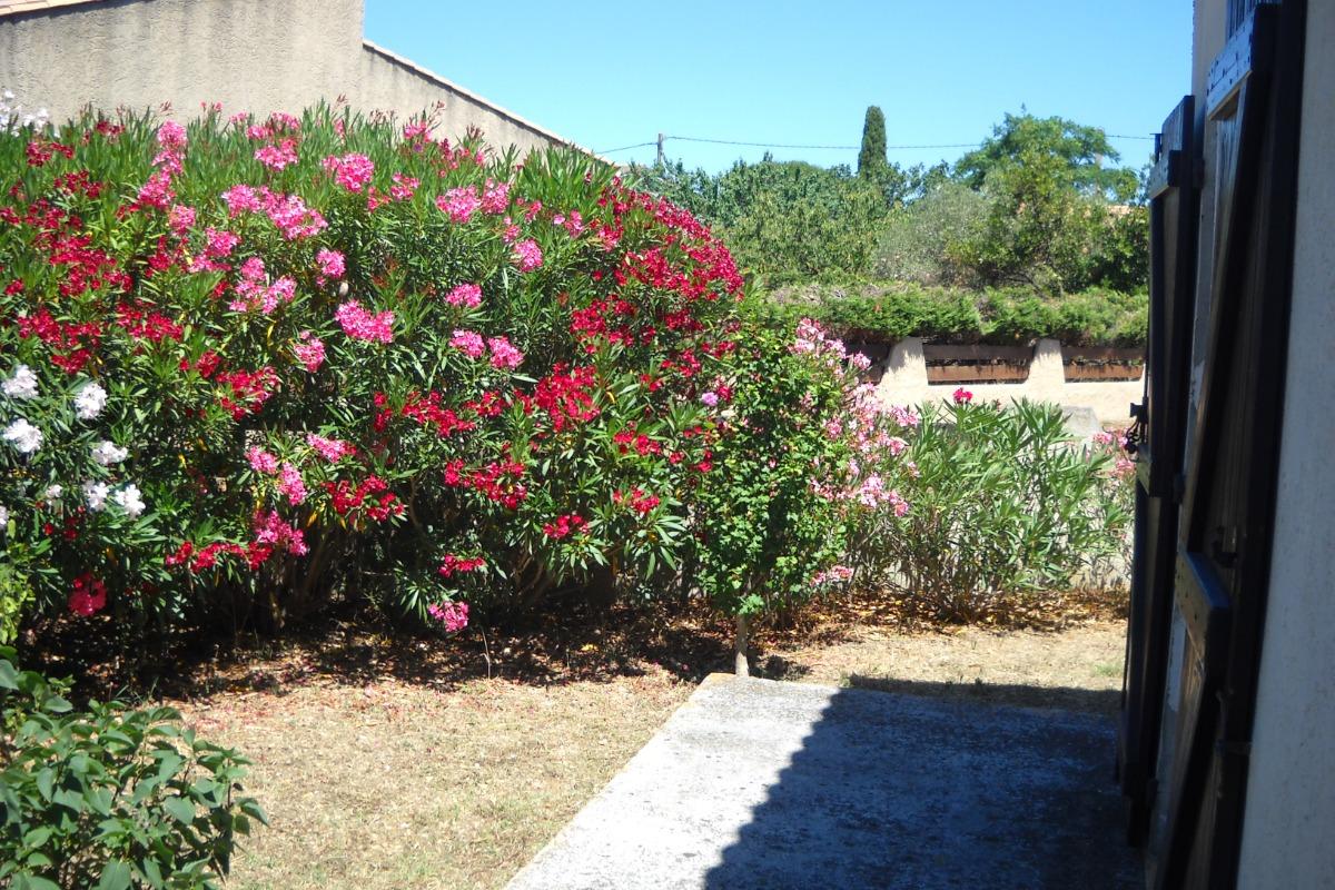 Lauriers fleurs devant salon - Location de vacances - VIAS