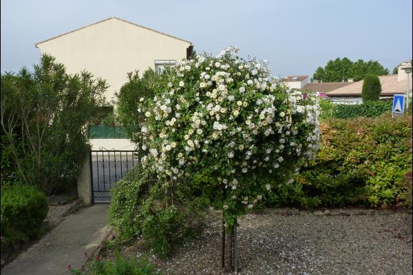 Jardin indépendant - Location de vacances - Montagnac
