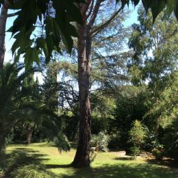 Jardin du studio - Location de vacances - Montpellier