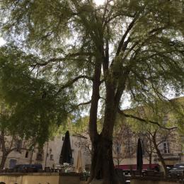Le micocoulier  - Location de vacances - Montpellier