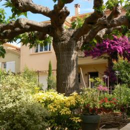 La Villa languedocienne - Chambre d'hôtes - Sète
