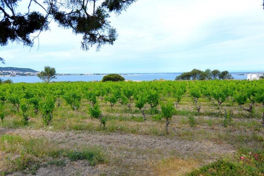 l'étang de Thau et les vignes de Muscat  - Location de vacances - FRONTIGNAN