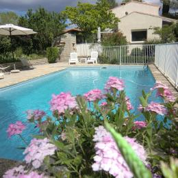 La piscine  - Location de vacances - Prades-le-Lez