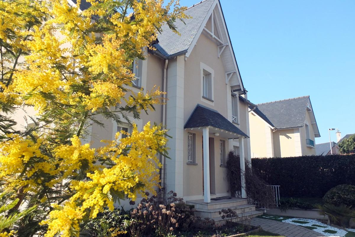 L'entrée avec le mimosa fleuri - Chambre d'hôtes - Saint-Malo