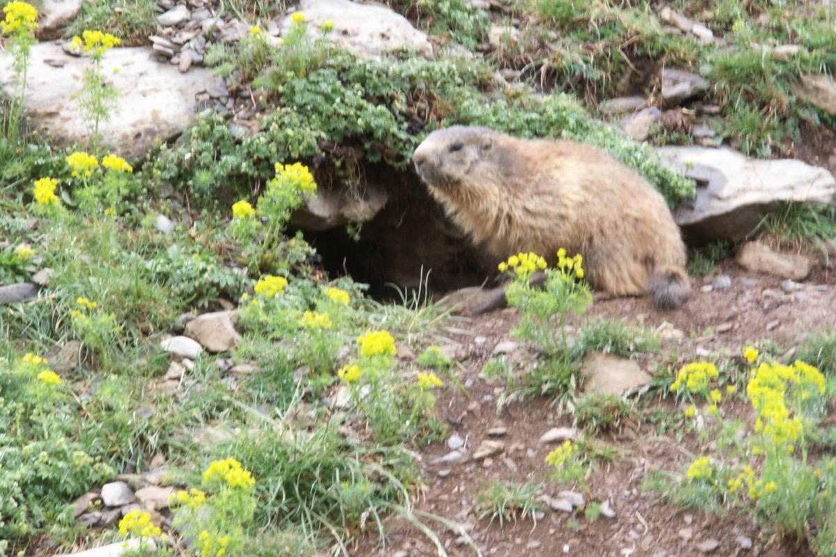 La marmotte - Chambre d'hôtes - Le Bourg-d'Oisans