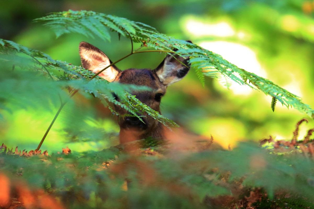 La terrasse - Location de vacances - Saint-Pierre-de-Bressieux