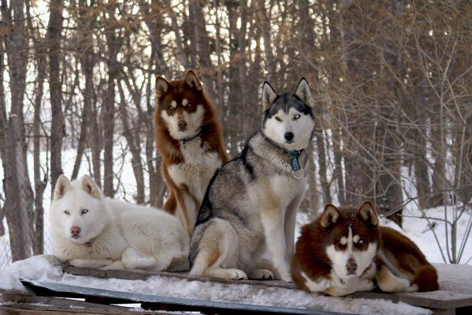 Les chiens de la Conversaria - Location de vacances - Villard-de-Lans