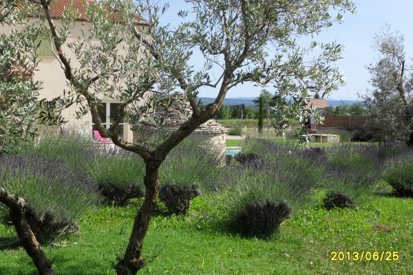 le jardin - Location de vacances - Manosque
