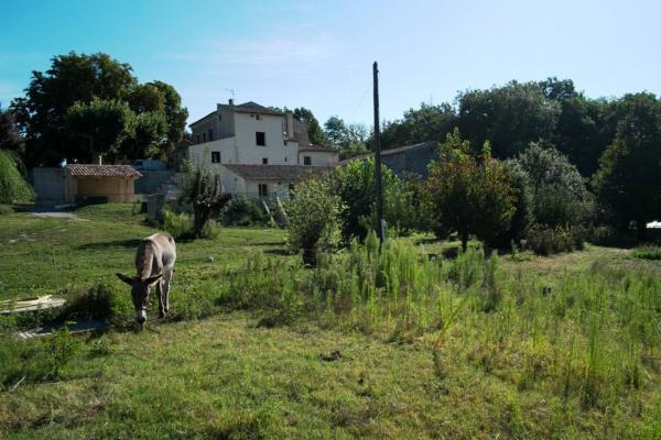 Les Ânes de Forcalquier : terrain avec une âne. - Location de vacances - Forcalquier